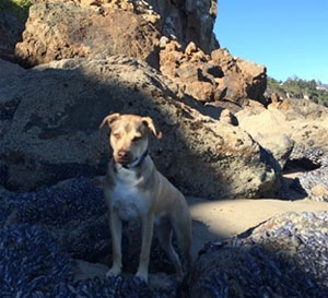 Cooper, learning to be a 'Dog of the World' (You were right Rob... Cooper LOVES the beach!)